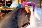 कोट्यधीश महिलेने डॉल्फिनशी केलं लग्न;आता 'पती'च्या मृत्यूनंतर जगतेय विधवेचं जीवन