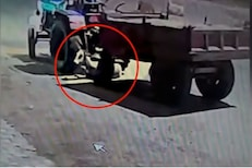 रस्त्यावर बसलेल्या गर्भवती गायीवर चढवला ट्रॅक्टर; धक्कादायक VIDEO पाहून हादराल!