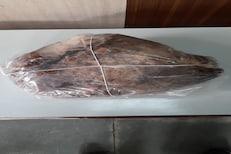 व्हेल माशाची उलटी विकणाऱ्याला मुंबईत अटक, उलटीची किंमत तब्बल 7.75 कोटी रुपये