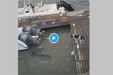 जबड्यातील कुत्र्याला सोडून मगरीने ठोकली धूम; नेमकं काय घडलं तुम्हीच पाहा VIDEO