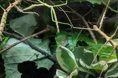 दाखवून द्या तुम्हीच आहात हुश्शार! फक्त 7 सेकंदात या फोटोतले 4 किडे शोधा
