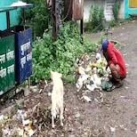 भुकेने तडफडणारी व्यक्ती आणि कुत्रा दोघे कचऱ्यामध्ये एकत्र शोधतायेत अन्न...
