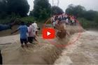 पावसाचं रौद्ररूप; मुसळधार पावसात बैलजोडी गेली वाहून, हृदय पिळवटून टाकणारा VIDEO