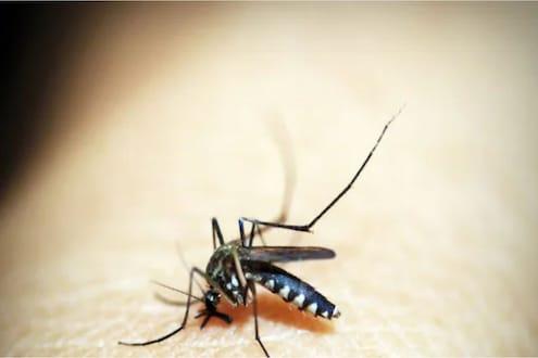 नाशिकमध्ये डेंग्यू, चिकनगुणियाच्या रुग्णांचा उच्चांक, डेंग्यूच्या रुग्णांची संख्या 700 पार