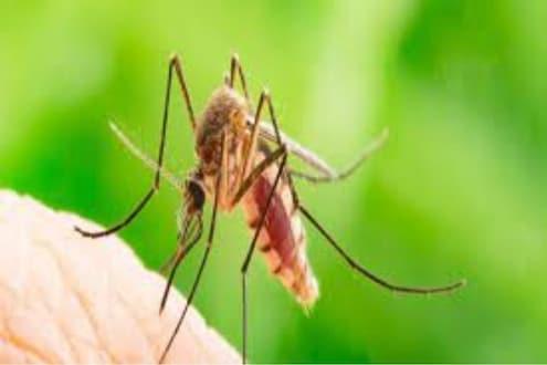 Dengue मुळे वाढली चिंता? आहारात 'या' गोष्टींचा समावेश केल्याने झटपट वाढतील प्लेटिलेट्स