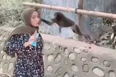Video - अरे बापरे! माकडासमोर जाऊन केलं पाऊट; तरुणीसोबत जे घडलं ते पाहून हादराल