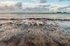 Explainer: मुंबई, गोवाच्या समुद्रकिनाऱ्यावर आढळले काळे चिकट गोळे, नक्की काय आहे