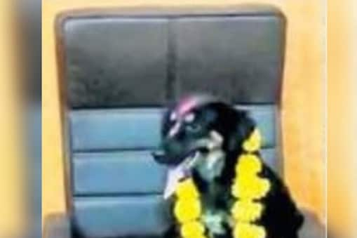 मोरेवाडीतील नागरिकांनी एका कुत्र्याला सरपंचाच्या खुर्चीवर बसवून त्याला फुलांचा हार घातला आहे. (फोटो-दिव्य मराठी)