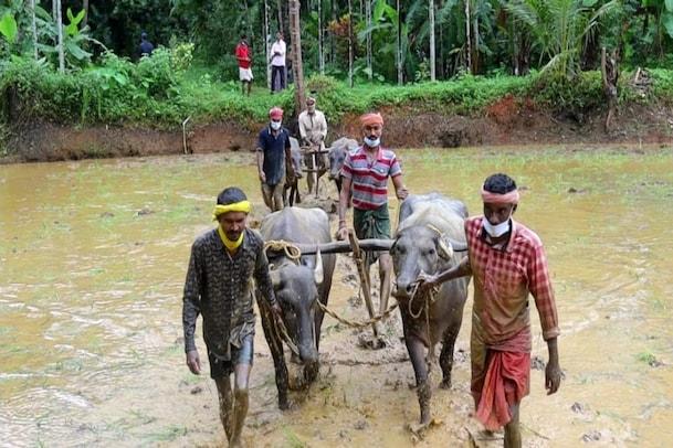 ಕೊರೋನಾ ಎಫೆಕ್ಟ್: ಬೆಂಗಳೂರಿನಿಂದ ತಮ್ಮ ಹಳ್ಳಿಗಳಿಗೆ ಬಂದು ಕೃಷಿ ಮಾಡುತ್ತಿರುವ ಜನ
