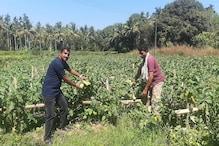 ತರಕಾರಿ ಬೆಳೆಯಲ್ಲಿಯೇ ಉತ್ತಮ ಆದಾಯ ಗಳಿಸುತ್ತಿದ್ದಾರೆ ಪುತ್ತೂರಿನ ಯುವ ಕೃಷಿಕರು