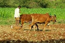 ಬೆಂಗಳೂರು ಗ್ರಾಮಾಂತರ ಜಿಲ್ಲೆಯಲ್ಲಿ ಒಟ್ಟು ಶೇ.52 ರಷ್ಟು ದಾಖಲೆಯ ಹಿಂಗಾರು ರಾಗಿ ಬಿತ್ತನೆ!