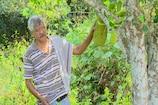 ಸಮಗ್ರ ಕೃಷಿಯಲ್ಲಿ ಯಶಸ್ವಿಯಾಗಿ ಯುವ ರೈತರಿಗೆ ಮಾದರಿಯಾದ ಮಂಗಳೂರಿನ ಕೃಷಿಕ!
