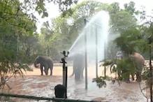 Mysore Zoo - ಮೈಸೂರು ಮೃಗಾಲಯ ಕೂಲ್ ಕೂಲ್; ಸ್ಪ್ರಿಂಕ್ಲರ್ಗಳಿಂದ ಖುಷಿಯಾಗಿವೆ ಝೂ ಪ್ರಾಣಿಗಳು