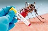 Dengue in Karnataka: ಕೊರೋನಾ ನಡುವೆ ಡೆಂಗ್ಯೂ ಕಾಟ; ಉಡುಪಿ, ಬೆಂಗಳೂರಿನಲ್ಲಿ ಅತೀ ಹೆಚ್ಚು ಪ್ರಕರಣಗಳು