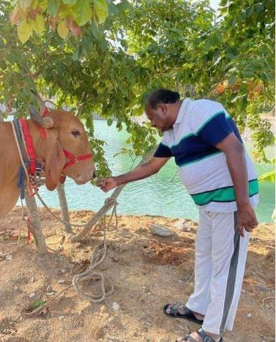 ಹಸುವಿನ ಆರೈಕೆ ನಡೆಸುತ್ತಿರುವ ಮಾಜಿ ಸಿಎಂ ಕುಮಾರಸ್ವಾಮಿ