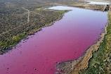 Argentina Lagoon: ಗುಲಾಬಿ ಬಣ್ಣಕ್ಕೆ ತಿರುಗಿದ ನದಿ.. ಇದರ ಹಿಂದಿರುವ ನಿಗೂಢ ಕಾರಣವೇನು?