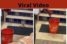 ಒಂದೇ ನಿಮಿಷದಲ್ಲಿ ಹಾವನ್ನು ಹಿಡಿದು ಬಾಕ್ಸ್ನೊಳಗೆ ತುರುಕಿದ ನಿಸ್ಸೀಮ; ಸಾಮಾಜಿಕ ಜಾಲತಾಣದಲ್ಲಿ Video Viral