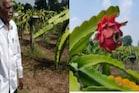 ಇಳಿವಯಸ್ಸಿನಲ್ಲಿ ಕೇವಲ 1 ಎಕರೆಯಲ್ಲಿ ಡ್ರ್ಯಾಗನ್ ಫ್ರೂಟ್ಸ್ ಬೆಳೆದು ಭರ್ಜರಿ ಲಾಭ ಗಳಿಸುತ್ತಿರುವ ರೈತ