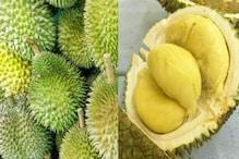 Durian Fruit: ಹಣ್ಣಿನ ಸಿಪ್ಪೆಯಿಂದ ಬ್ಯಾಂಡೇಜ್, ಗಾಯ ಬೇಗ ಗುಣವಾಗುತ್ತಂತೆ!