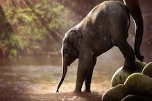 Holiday Plan: ಕರ್ನಾಟಕದೊಳಗೆ Wildlife Tour ಮಾಡೋಕೆ ಈ ಜಾಗಗಳು ಬೆಸ್ಟ್
