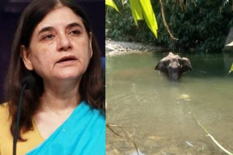 Kerala Elephant Death | മലപ്പുറത്തെക്കുറിച്ച് പരാമർശം നടത്തിയ മനേക ഗാന്ധിക്ക് എതിരെ കേസെടുത്തു