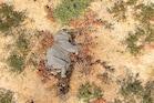ബോട്സ്വാനയിലെ 350 ആനകളുടെ ദുരൂഹമരണം; അന്വേഷണം തടസപ്പെടുത്തി കോവിഡ് 19