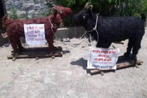 The clay goats, Sanskriti Bachao Manch