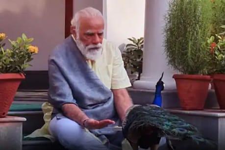 Viral Video| ഔദ്യോഗിക വസതിയിൽ മയിലുകൾക്ക് തീറ്റകൊടുത്ത് പ്രധാനമന്ത്രി നരേന്ദ്രമോദി; വീഡിയോ വൈറൽ
