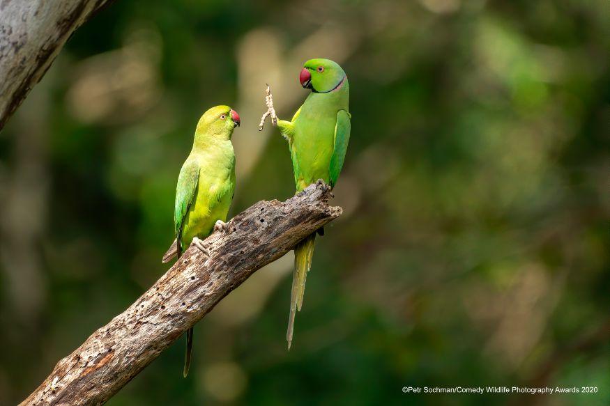 'ശ് ശ്... സാമൂഹിക അകലം' (Image: Petr Sochman/Comedy Wildlife Photo Awards 2020)
