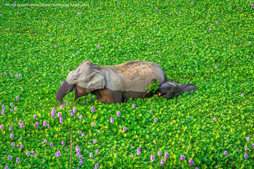 (Image: Kunal Gupta/Comedy Wildlife Photo Awards 2020)
