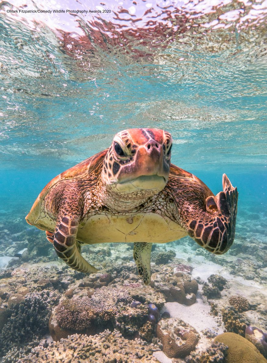 (Image: Mark Fitzpatrick/Comedy Wildlife Photo Awards 2020)