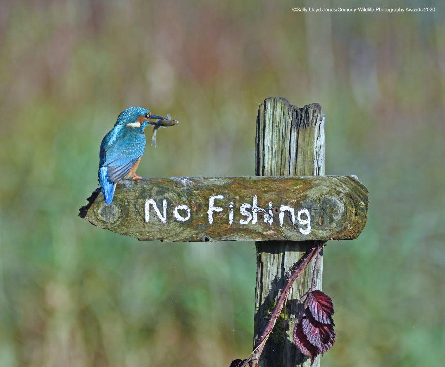 ഞാൻ അങ്ങനെ ചെയ്യുമോ? (Image: Sally Lloyd-Jones/Comedy Wildlife Photo Awards 2020)