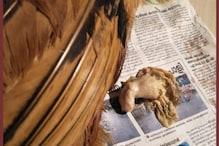 Weird News | പിണറായിയിൽ കോഴി പ്രസവിച്ചു; അന്തംവിടേണ്ട, സത്യമാണ്; ഉടമ പറയുന്നത് കേൾക്കൂ