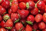 Vattavada Strawberry  സന്ദർശകർ എത്തി തുടങ്ങി; വട്ടവടയിലെ സ്ട്രോബറി കർഷകർ പ്രതീക്ഷയിൽ