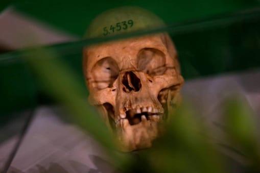 human skull  (IReuters)