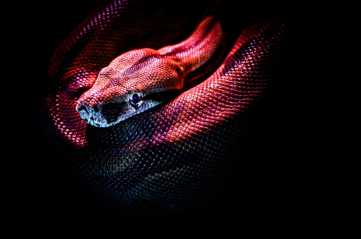 2. ചത്ത പാമ്പിനെ കാണുന്നത് - ഇത് വളരെ അപകടകരമാണ്. നിങ്ങളുടെ ജീവിതത്തിൽ ചില പ്രശ്നങ്ങൾ വരുന്നുണ്ടെന്നാണ് ഇത് അർത്ഥമാക്കുന്നത്.(Symbolic image)