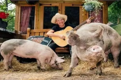 At Huddersfield Woods Sanctuary musicians perform while sitting among pigs.