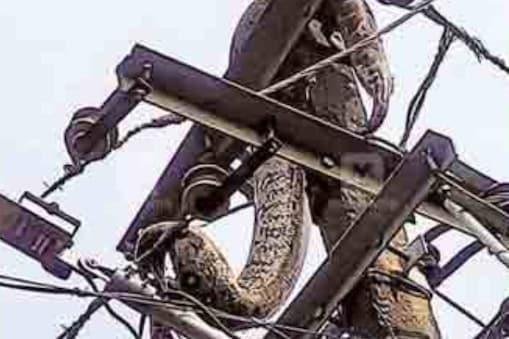 snake-Electric pole