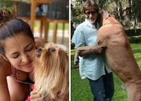 Dog Love: ମଲାଇକା ଅରୋଡ଼ାଙ୍କଠାରୁ BigB ଯାଏଁ, ଏମାନେ ବଲିଉଡର ବଡ଼ କୁକୁର ପ୍ରେମୀ