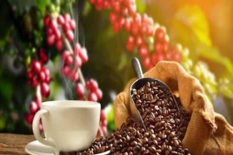 International Coffee Day: ଆପଣଙ୍କ ଦିନ ଫ୍ରେସ କରୁଥିବା କଫି ଶ୍ରମିକଙ୍କୁ ମନେ ପକାନ୍ତୁ