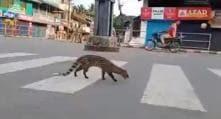Civet on Kerala Road, Nilgai Outside Noida Mall: Photos of Animals Amid Covid-19 Lockdown Go Viral