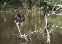 Thar belt, the new nest for birds
