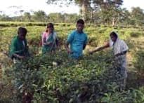 Assam adivasis want no govt visits for electioneering