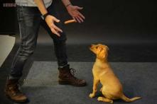 Watch: These dogs were shown magic with a levitating wiener and their reaction was hilarious!