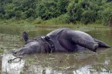 Two rhinos killed in Kaziranga by poachers