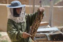 Afghan Schoolgirl Turns Honey Into Money at Double the Per Capita in War-torn Country