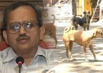 Kill all stray dogs, says Mumbai municipal chief