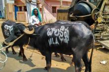 Superstar Nandamuri Balakrishna's Constituency Faces Water Crisis in Andhra