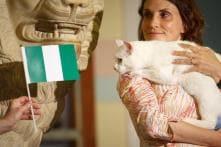Feline Fortune-teller Achilles Tips Nigeria to Beat Argentina