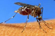 Number of dengue cases in Delhi soar to 611